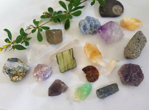 Natural Raw CRYSTAL & FOSSIL SPECIMENS Huge Choice Healing Reiki Gemstones Rough