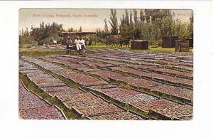 FRUIT DRYING Sth Australia RENMARK Vintage postcard  AUSTRALIA