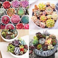 400pcs Mixed Succulent Seeds Lithops Living Stones Plants Cactus Exotic Plant
