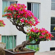 100pcs /bag Mixed Bougainvillea Bonsai Flower Plant Seeds Home Garden Decor
