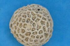 Fossil Coral Sample