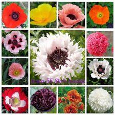 100Pcs Poppy Flower Seeds Papaver Rare 20 Kinds Perennial Annual Garden Plants