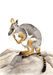 Original Watercolour Yellow Footed Rock Wallaby Painting