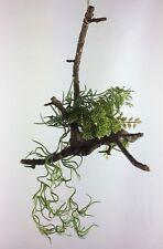 Dekopflanze*Kunstpflanze auf Wurzel*Hängedeko*Sedum*