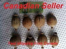 Premium - 1000 Organic Giganteum Poppy Seeds, Papaver Somniferum, Giant, Huge!!