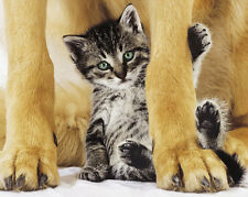 POSTER Safe and Pretty Dog and Kitten 16x20