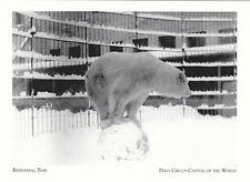 (P008) Postcard - Peru Circus Bear (modern card)
