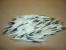 100 american porcupine quills/guard hair/native craft,medicine wheel,quill work