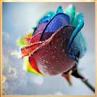 DIY 5D Diamond Painting Rose Flower Embroidery Craft Cross Stitch Home Decor Kit