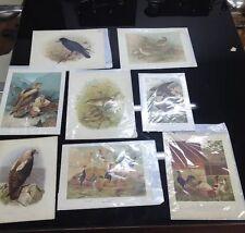 Lotto 8 Stampe Antiche Colorate Raffiguranti Uccelli e Volatili