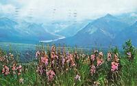 Postcard Alaska Range Eureka Flats Posted 1968