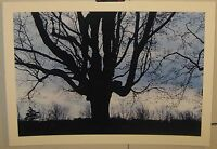 Vintage 1962 DANIEL FARBER 'Sugar Maple' New England Tree Photo - SILHOUETTE