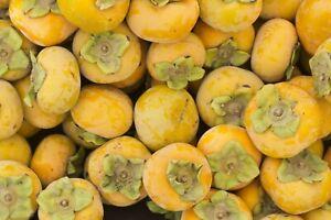 exotische Frucht Samen LOTUSPFLAUME Wintergarten Terrasse  Garten Obst Saatgut