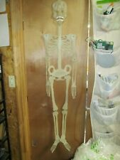 Vintage Plastic 5 Foot Tall Skeleton Décor Decoration Wall Hanging