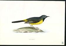 1870 ORIGINAL Hand Colored Bird Plate RARE Grey Wagtail