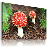 TOADSTOOL VEGETABLE KITCHEN MUSHROOMS  View Canvas Wall Art Picture F18 MATAGA .