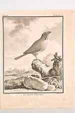 Histoire Naturelle Oiseaux Buffon v 1780 Mansard -De Sève Le Grand Tangara  -