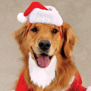 Casual Canine Kris Kringle Dog SANTA CLAUS Costume XS S M L XL Red and white.