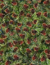 Christmas Fabric - Pine Cone & Evergreen Branch Black - Timeless Treasures Yard