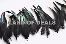 30 IRIDESCENT Black rooster feathers loose coque tail and schlappen 5-8 in long