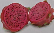 "(1) Cutting/Stem ~Red Flesh~ Dragon Fruit Plant Vine Tree Pitahaya Hylocereus 8"""