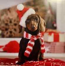 CUTE DACHSHUND CHRISTMAS CARD