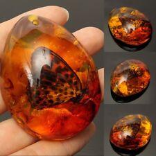 1st Natur Bernstein Anhänger Naturbernstein Schmetterling Amber Schmuck Insect