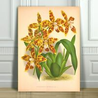 """JEAN LINDEN - Beautiful Speckled Yellow Orchid #24 - CANVAS PRINT POSTER - 10x8"""""""