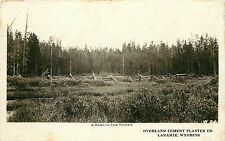 RPPC Advertising Card Oveland Plaster Company Laramie WY A Park in the Timber