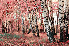 SUPERB AUTUMN FOREST LANDSCAPE CANVAS #325 QUALITY FRAMED WALL ART PICTURE A1
