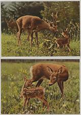 50/616 sammelbild grande formato corzos Reh rehfamilie Ricke con Kitz caza cazadores