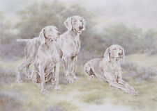 "WEIMARANER GUN DOG FINE ART LIMITED EDITION PRINT - ""Weimaraner Group"""