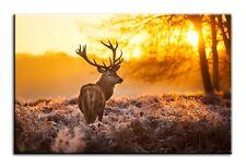 Large Wall Art Canvas Print of Deer Stag Forrest Sunset Framed