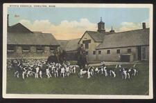 POSTCARD HAMILTON MA/MASSACHUSETTS MYORIA HUNTING DOG KENNELS 1910'S