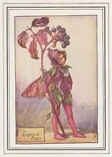 CICELY MARY BARKER c1930 THE DOGWOOD FAIRY Painting Vintage Art Book Print