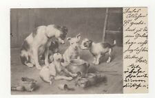 Dogs Germany 1904 Postcard 437a