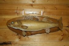 Real Skin Mount Walleye Pike Northern Musky Sauger Fish Taxidermy FW39