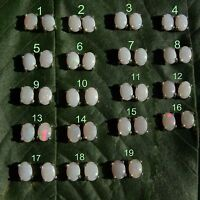 Solid Australian White Opal Stud Earrings Coober Pedy 925 Sterling Silver 7x5mm