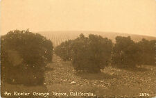 Vintage Postcard Orange Grove Exeter CA  Tulare County