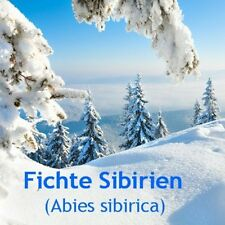 ***ätherisches Fichtennadelöl, 50ml Sibirien/GUS - Topp-Sauna  - Öl
