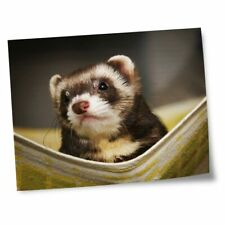 "8x10"" Prints(No frames) - Ferret Hammock Pet Rodent Animal #16329"