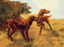 IRISH SETTER CHARMING DOG GREETINGS NOTE CARD TWO BEAUTIFUL DOGS IN FIELD