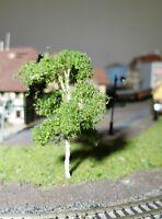 3 Birken, 80 mm, 8 cm hoch in Premium Qualität, jeder Baum ist ein Unikat