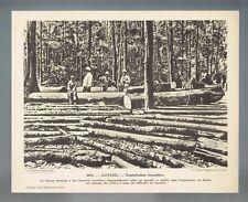 ▬► Planche photographique 📷 GUYANE - Exploitation forestière