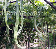 Snake Gourd White King - Chinese Cucumber, Potlakaaya, Pudalankaai, Padavalanga