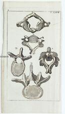 1812 Wilhelm Science Health Engravings (6) Human Skeleton Hand Color 1002