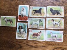 """Dwight's Soda """"Dog Series"""" Trade Cards - Lot of 8 Dwight"""