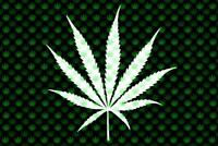 Nude Model With Weed Leaves Covering Body 24 x 36 Poster For The Man Cave