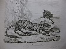 1834 Voyage autour du monde  d'Urville 4 gravures double feuille pêche Tasmanie