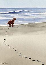 IRISH SETTER Beach Painting Dog 8 x 10 ART Print Signed DJR